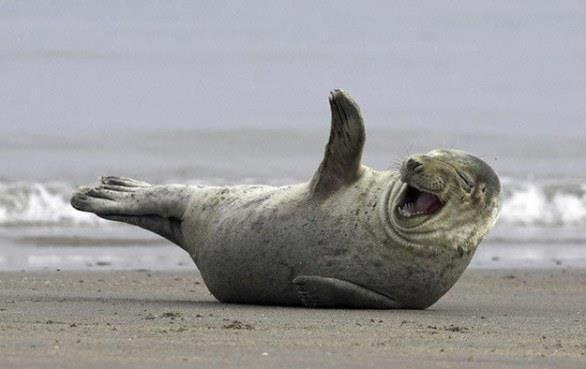 Una foca sulla spiaggia saluta il fotografo