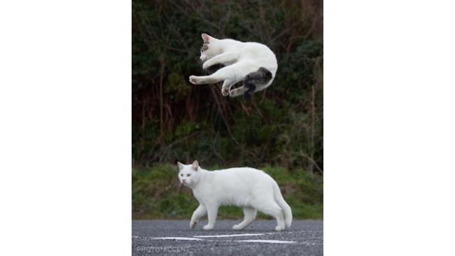 Un gatto ninja
