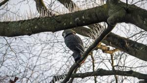 Gli spuntoni posizionati sugli alberi