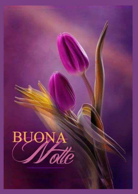 Due tulipani - Fiori, le più belle immagini per il buongiorno, buonanotte e buon compleanno