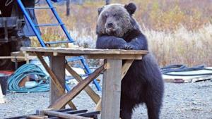 Orso - persona: quando bestia ed essere umano si incontrano