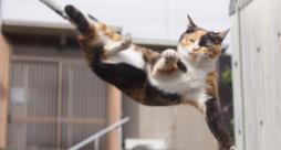 I gatti ninja: teneri ma sempre letali