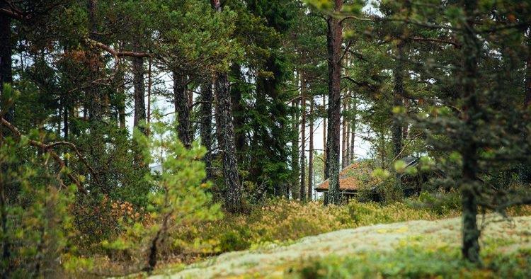L'isola delle donne è in Finlandia