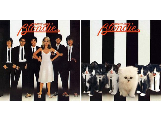 I gatti come Blondie!