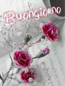 Delle rose su uno spartito musicale - Fiori, le più belle immagini per il buongiorno, buonanotte e buon compleanno