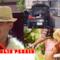 Collage delle copertine dei10 migliori post di FlopTV