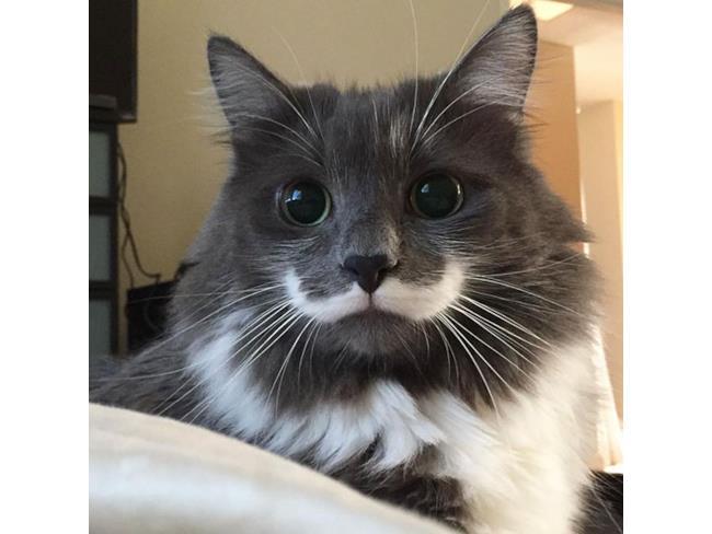 Un gatto col baffo