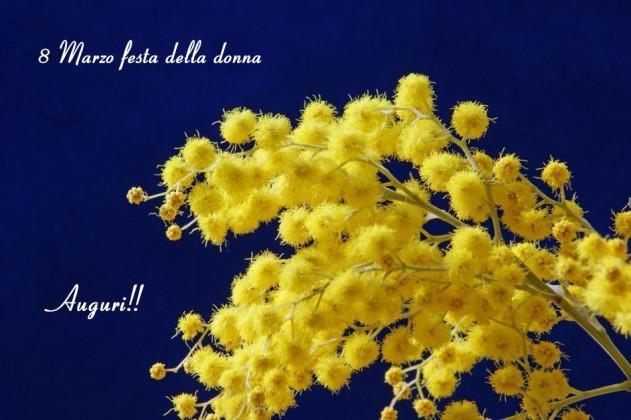 Una pianta di mimosa - Immagini per la Festa della Donna
