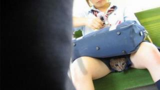 Un gatto nascosto
