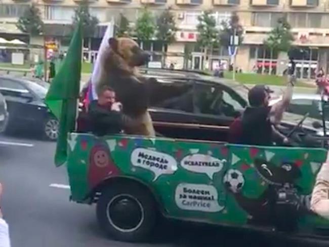Orso fatto sfilare per le strade di Mosca durante la coppa del mondo