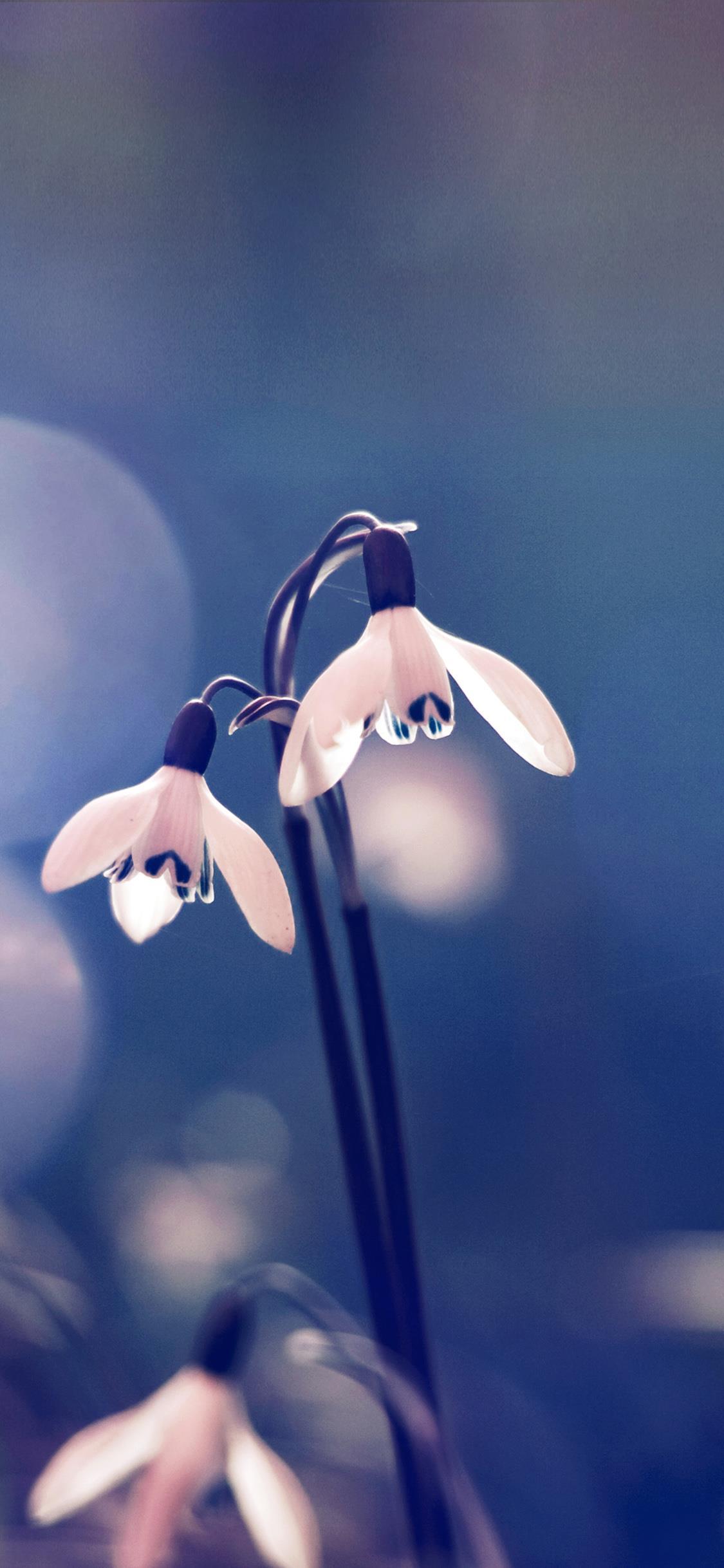 Il primo piano di un fiore - Sfondi per iPhone, i migliori da scaricare gratis