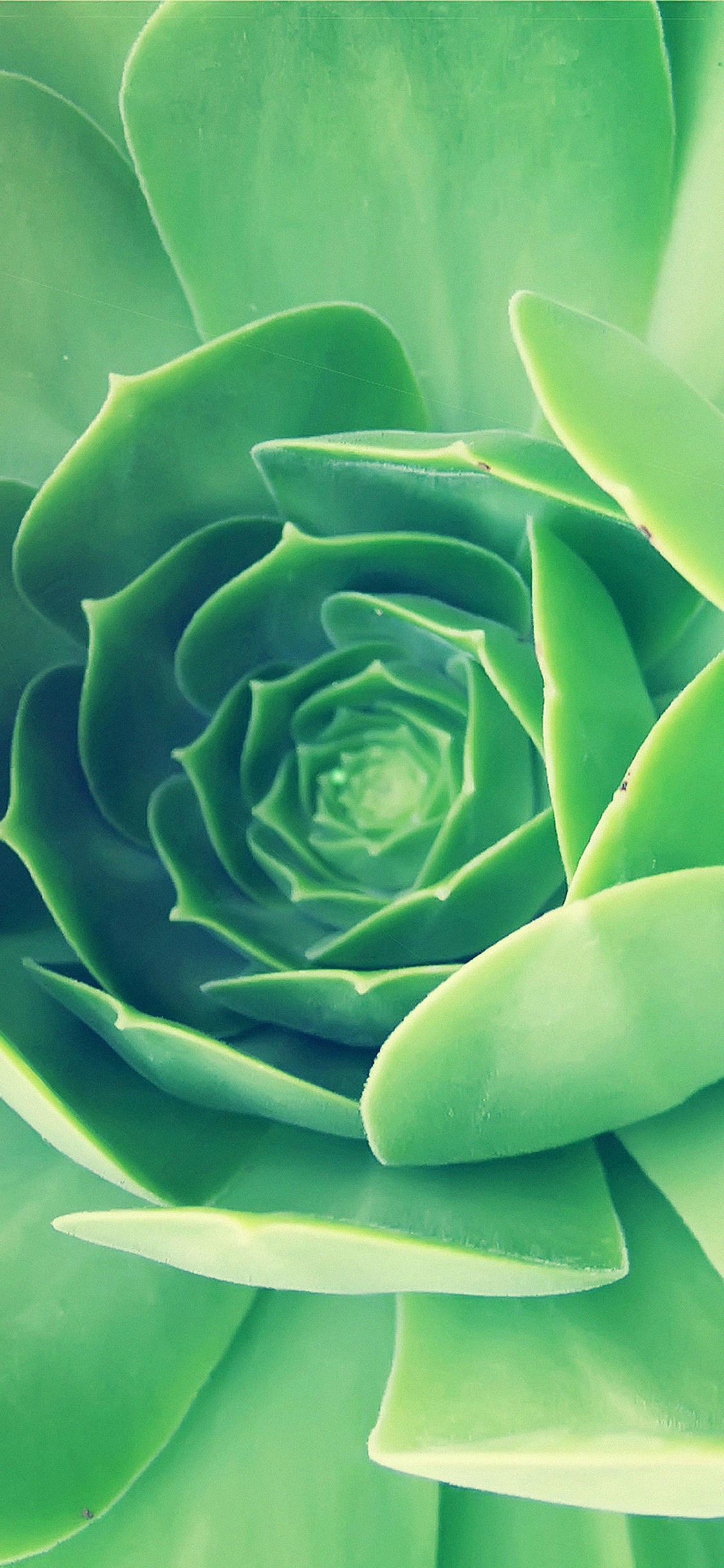 Un fiore verde - Sfondi per iPhone, i migliori da scaricare gratis
