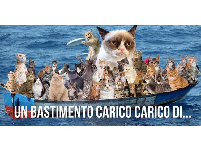 Un bastimento carico di felini del #gattinisusalvini