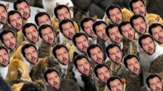 I gatti col volto di Salvini invadono il web