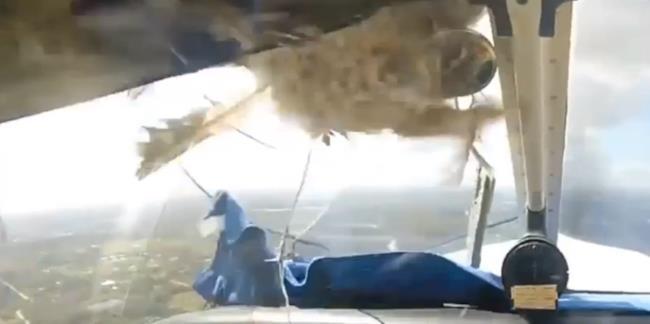 uccello rompre il vetro di un piccolo aereo da turismo