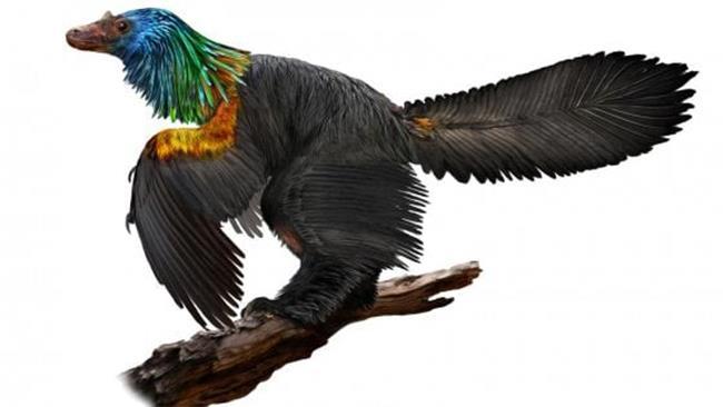 La ricostruzione del dinosauro multicolor