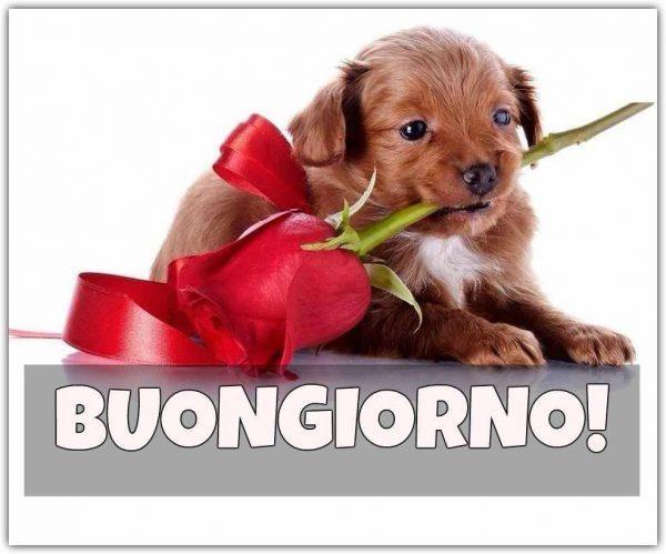 Un cagnolino con in bocca una rosa rossa