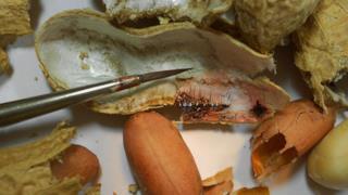 Il guscio di un'arachide