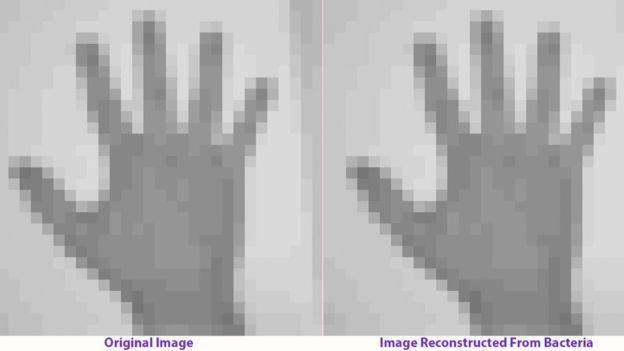 L'immagine di una mano umana nel DNA batterico