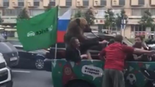 Orso che suona la trombetta nel traffico durante Russia 2018