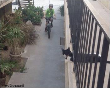 Un gatto dà il 5 a un ragazzo in bicicletta - GIF di reazione ai commenti, le più divertenti da usare su Whatsapp e Facebook