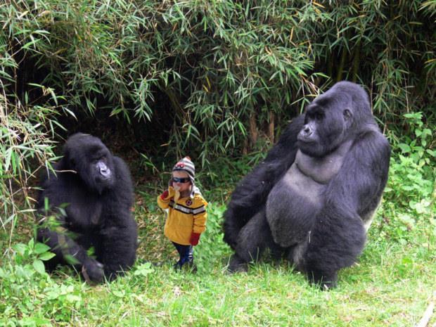 Il bambino Carter in un meme con i gorilla