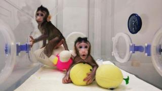 La foto di due scimmie.