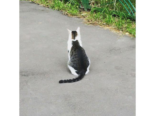 Un gatto sulla schiena