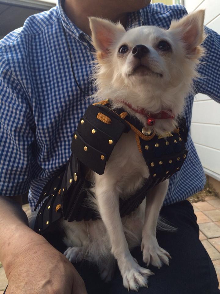 Un cane che indossa un costume tratto dalla tradizione giapponese.