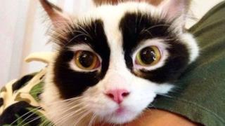 Un gatto con la maschera
