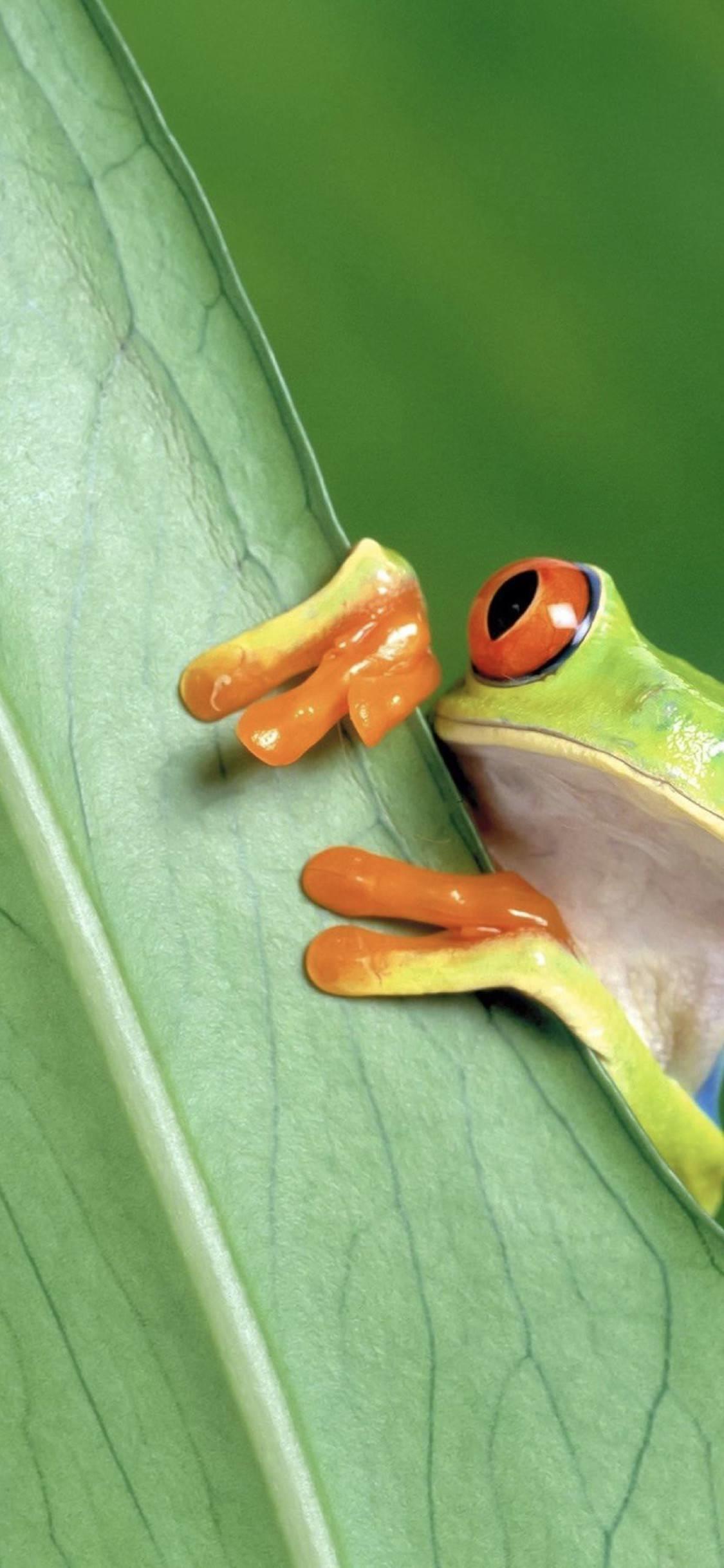 Una simpatica rana - Sfondi per iPhone, i migliori da scaricare gratis
