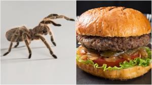 A sinistra una tarantola e a destra un hamburger