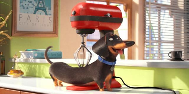 Pets, Vita da Animali frame da video