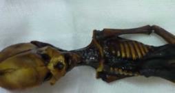 Lo scheletro di Ata