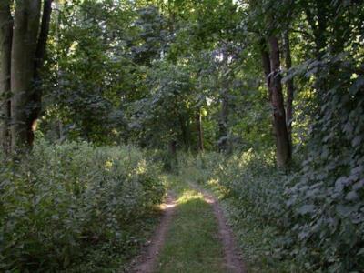 Il bosco dove si nascondeva Malcolm Applegate