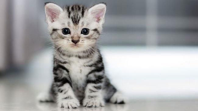 La foto di un gatto