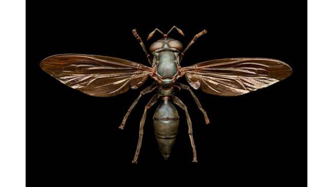Una vespa