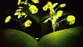 Le piante che brillano al buio
