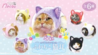 I berretti per i gatti
