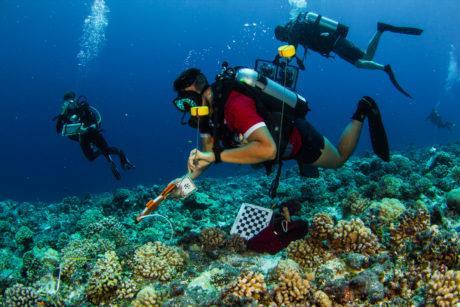 I ricercatori che aderiscono alla 100 Island Challenge