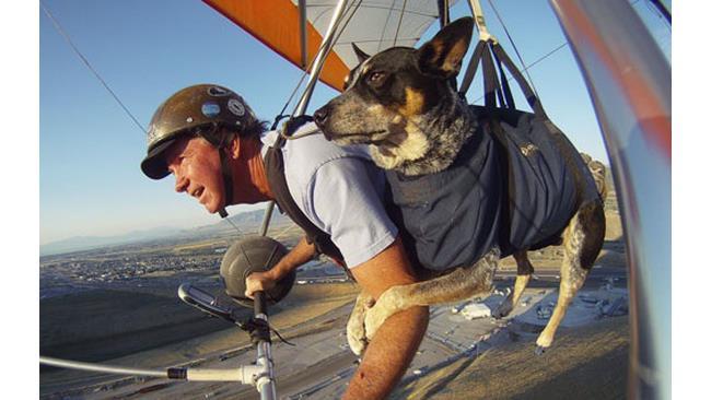 Non abbandonare i cani - 1