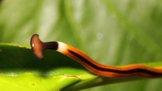 La foto dell'esemplare