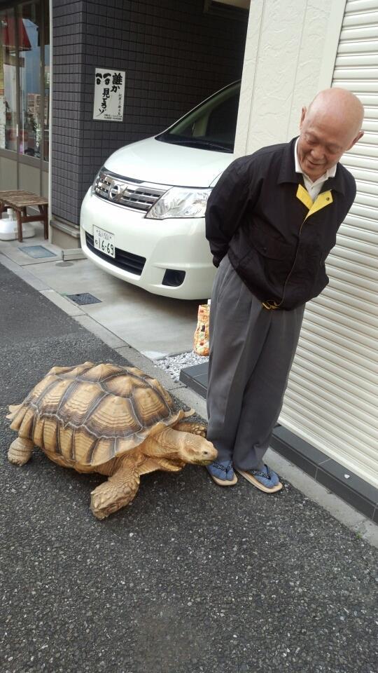 Una foto della tartaruga gigante e del signore giapponese