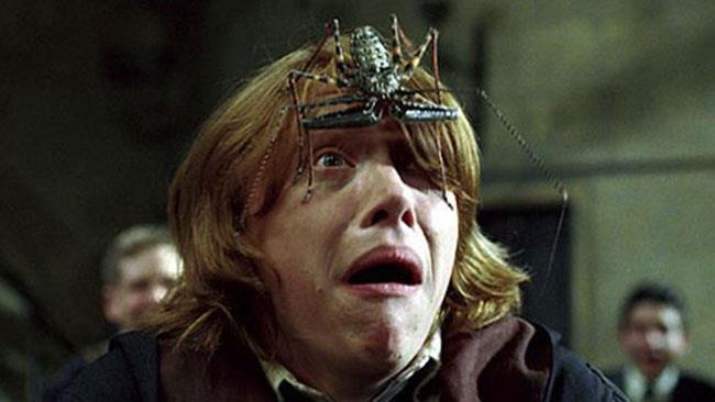 Ron Weasley aveva previsto tutto, i ragni ci stermineranno!