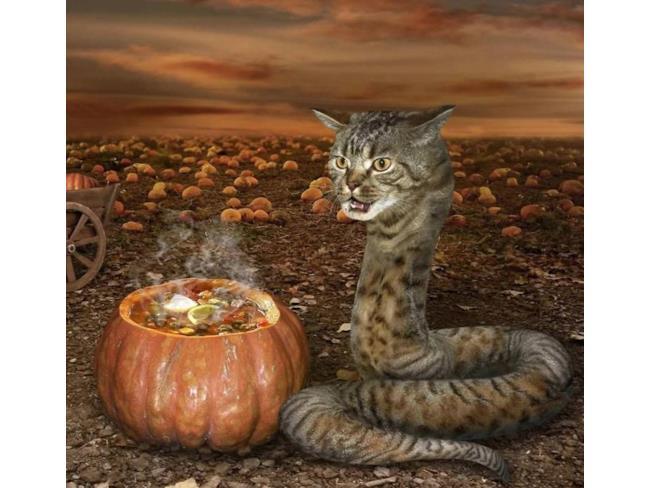 Un gatto serpente