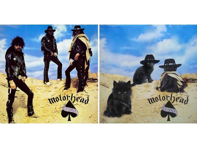 I gatti come i Motörhead