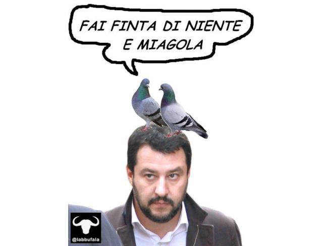 Anche i piccioni piovono su Salvini