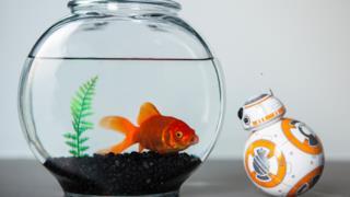Se prima bastava usare il touchscreen, ora il nuovo BB-8 sarà manovrabile con... la Forza!