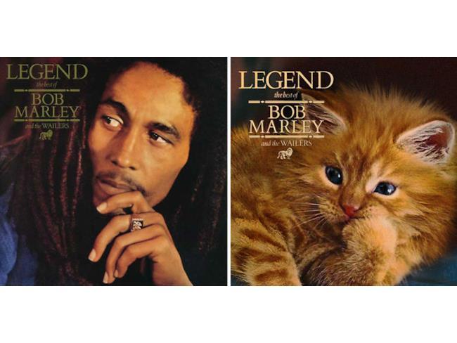 Il gatto Bob Marley