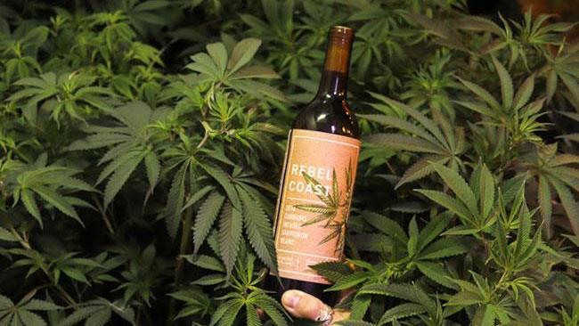 Il vino infuso di erba